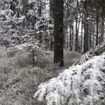 Kleiner Bärenstein - Blick in den Wald