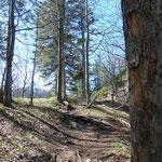 Letzter Anstieg durch einen kurzen Waldabschnitt auf das Marienköpfl