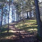 Blick zurück auf den Waldpfad, der vom Zederbauerspitz runter führt