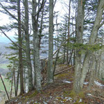 Gipfelbereich des Schwarzkogels
