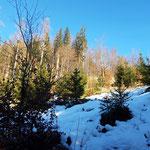 Der letzte Waldabschnitt, der uns noch vom Gipfel trennt