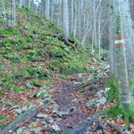 Über den steilen und relativ rutschigen Waldpfad geht es aufwärts