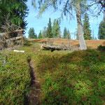 Nachdem wir ein Stück des Weges einen teils schwer erkennbaren Jägersteig gegangen waren, war der Weg nun wieder hervorragend erkennbar
