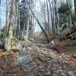 Teils steiler Waldanstieg