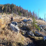 Nach der Durchquerung des Waldes geht es über die Wiese weiter, von Steinmännchen ist der Weg markiert