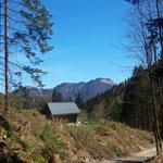 Am Rückweg auf der Forststraße