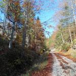 Erstes Stück des Weges entlang der Forststraße