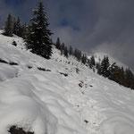 Wegverlauf durch den Schnee - von der Almwiese geht es nun in den Wald