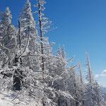 Durch das Winterwonderland