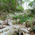 Einige seilversicherte Passagen im Wald