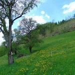 Nachdem wir den Bauernhof passiert hatten, führt der Weg hier klar ersichtlich weiter Richtung Kreuzmauer