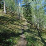 Durch den immer schöner werdenden Wald geht es aufwärts zur Goiserer Hütte