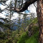 Abstieg wieder durch den Wald
