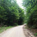 Der Großteil des Weges verläuft über die Forststraße