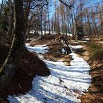 Aufstieg durch den Wald mit vereinzelten Schneefeldern