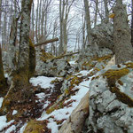 Vorbei an dieser felsigen Passagen ist der Waldrücken erreicht, über den es bis zum Gipfel geht