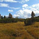 Schon hatten wir den felsigen Wegabschnitt wieder hinter uns gelassen - weiter geht es auf einem Wald- und Wiesenweg