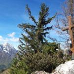 Gipfel des Tamberges