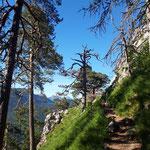 Letzter Anstieg durch den Wald - danach geht es rechts zum Großen Schoberstein