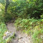 Den ersten Abschnitt des Waldweges entlang