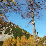 Die kleinen Holzschilder weisen den Weg zum Mannsberg