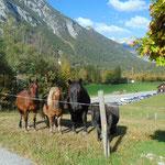Kurz vor dem Parkplatz wurden wir noch von einer Gruppe Pferde willkommen geheißen