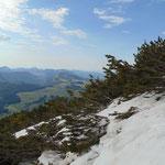 Weg über Schnee und durch Latschen hindurch