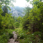 Der nächste Wegabschnitt verläuft durch den Wald