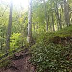 Teilweise steiler geht es zunächst durch den Wald