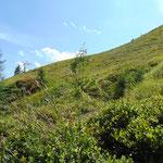 Wegverlauf Richtung Lichtensteinkopf