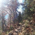 Am Rückweg durch den Wald