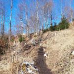 Zuerst über den Wiesenpfad geht es gleich in den Wald weiter