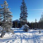Wegverlauf in der idyllischen Winterkulisse