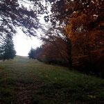 Diese Wiese ist der letzte Wegabschnitt vor der Mollner Hütte