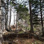 Letzter Anstieg durch den Wald vor dem Gipfel des Rauen Kaiblings