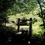 Der Waldweg mündet in eine große Almweide