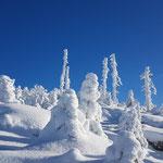 """Was soll man sagen, außer """"Walking in a winter wonderland"""" - deswegen kann ich ein paar weitere Landschaftsbilder nicht vorenthalten"""