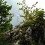 Felsformationen entlang des Weges