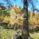 Durch den Wald und über die Almwiesen nach der Laglalm