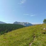 Bei der Wiese angekommen, die der letzte Wegabschnitt vor dem Gipfel ist - überall sind Schafe zu hören
