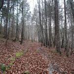 Über den Waldweg beginnt es etwas steiler bergauf zu gehen