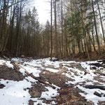 Los geht es zunächst nicht allzu steil durch den Wald - das ändert sich allerdings schnell