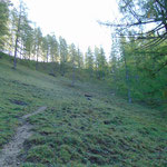 Nach dem teils steilen und rutschigen Aufstieg queren wir einen Lärchenwald Kessel