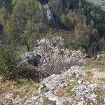 Blick auf die gegenüberliegende Ruine Scharnstein