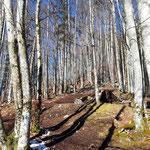 Anstieg durch den Wald