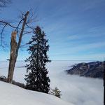 Schließlich bot sich dieser traumhafte Ausblick über das Alpenvorland
