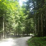 Wegbeginn - Forststraße durch den Wald