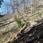 Über den teils steilen Waldpfad geht es aufwärts zum Durchgangkogel