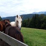 Pferde auf der Födinger Alm