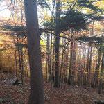 """""""Goldener Herbst"""" trifft es hier wirklich"""